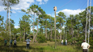 biologists in field with net around bat house