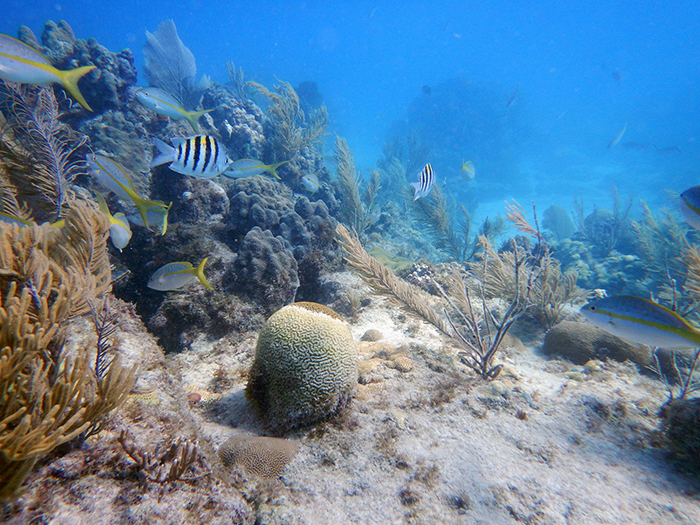 Underwater view of coral reef