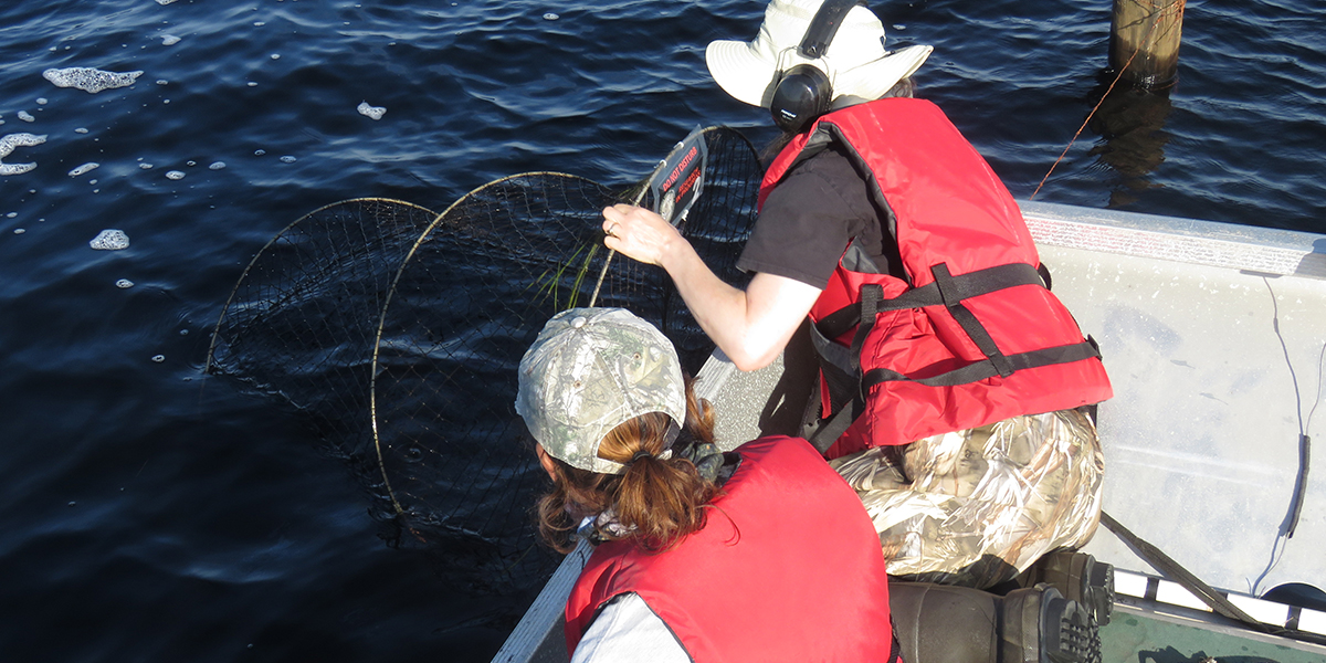 Researchers in the field working with a hoop trap.